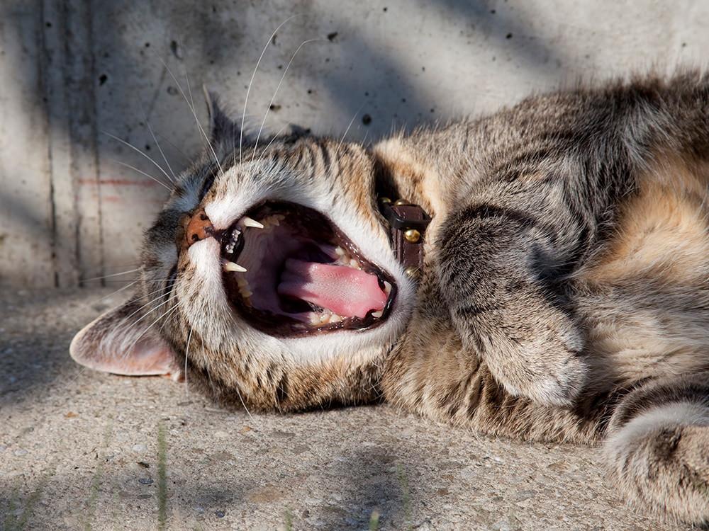 barf artgerecht - katze