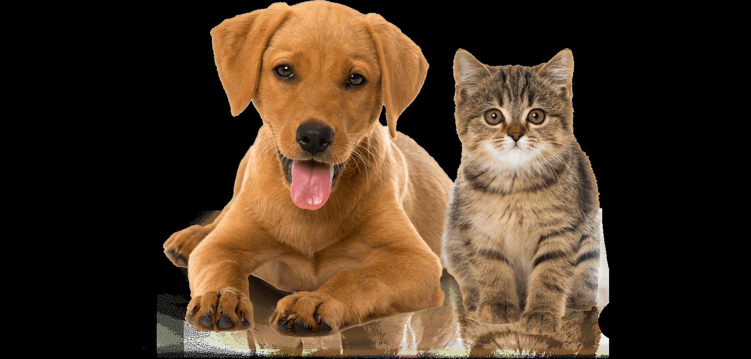 barf artgerecht für Hund und Katze